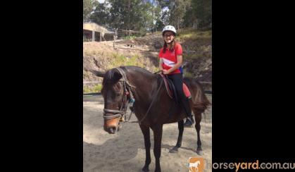 Lukah 16hh thoroughbred gelding true gentleman on HorseYard.com.au