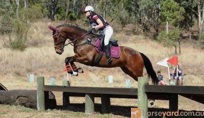 Confident Allrounder on HorseYard.com.au