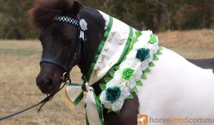 Toy Image Jive on HorseYard.com.au