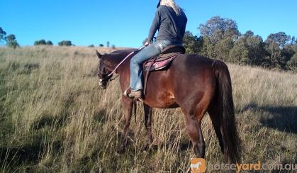 Excellent trail riding horse on HorseYard.com.au