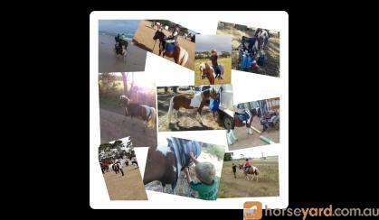 Pony on HorseYard.com.au