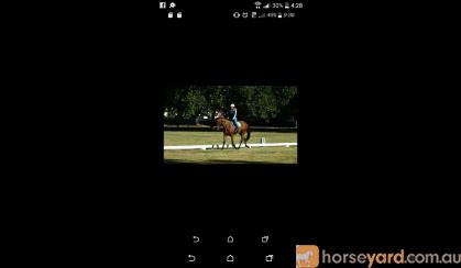 Lockstar 'Locky' on HorseYard.com.au