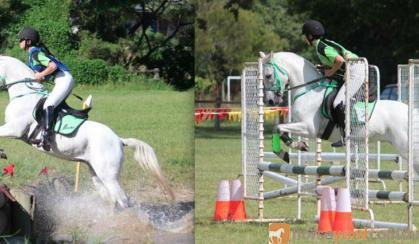 Sporting, Showjumping, XCountry Pony on HorseYard.com.au