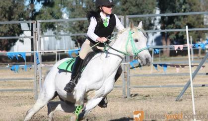 Sporting, Showjumping, XCountry Pony on HorseYard.com.au