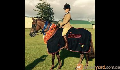 BelleVale Equine Attire Rugs & Accessories on HorseYard.com.au