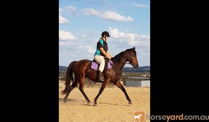 Beautiful Bay Mare on HorseYard.com.au