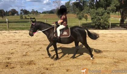 12hh quiet child's lead rein pony on HorseYard.com.au