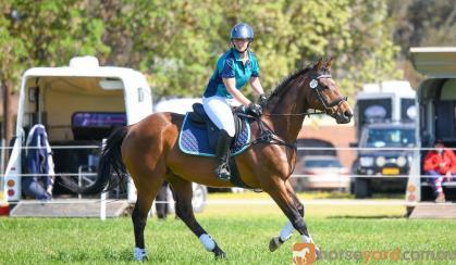 Show jumping Thoroughbred on HorseYard.com.au