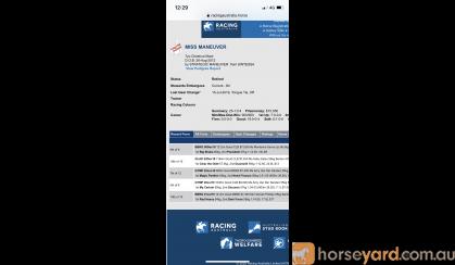Price reduced! Urgent sale on HorseYard.com.au