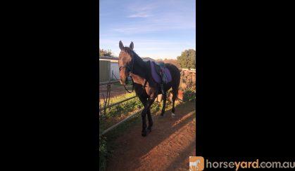 Cash! Handsome man  on HorseYard.com.au