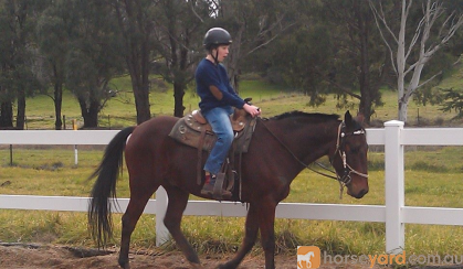 Give Chance a chance on HorseYard.com.au