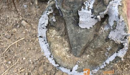 Hoof Clay on HorseYard.com.au