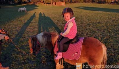 Two Sweet Kids Ponies  on HorseYard.com.au