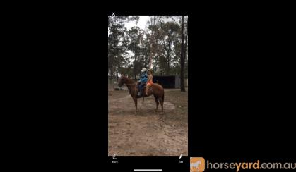 YQS Wats It To you  on HorseYard.com.au