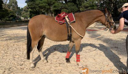 Eye catching pony on HorseYard.com.au