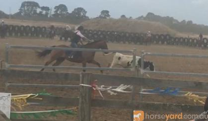 ROSE RIDGE STOCK HORSE FOR SALE on HorseYard.com.au