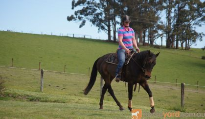Thoroughbred Mare on HorseYard.com.au