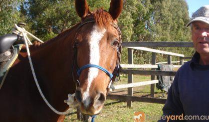 Best horse ever on HorseYard.com.au