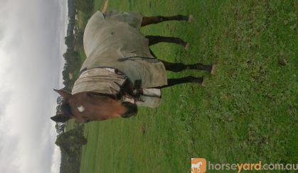 Free to good home on HorseYard.com.au