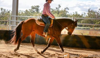 Kind, Sensible ASH Gelding  on HorseYard.com.au