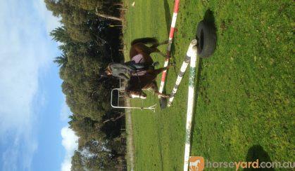 Welsh A mare on HorseYard.com.au