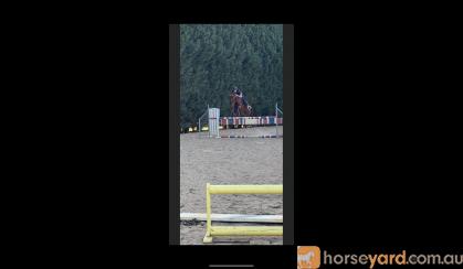 Dream alrounder on HorseYard.com.au