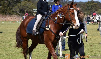 Quiet pony on HorseYard.com.au