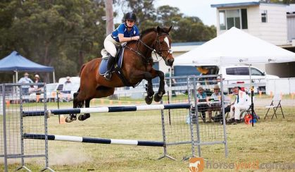 Perfect Gentleman on HorseYard.com.au