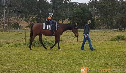 Trail riding  on HorseYard.com.au