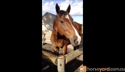 Jimmy  on HorseYard.com.au
