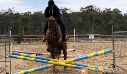 RED FRED on HorseYard.com.au