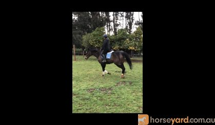 great project or broodmare on HorseYard.com.au