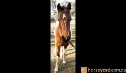 BRED TO IMPRESS!  on HorseYard.com.au