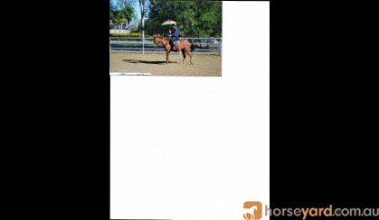 Dressage Pony on HorseYard.com.au
