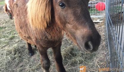 Taffy colt on HorseYard.com.au