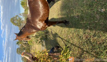 Boss on HorseYard.com.au