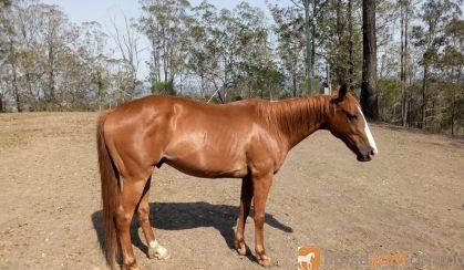Beautiful Quiet Boy on HorseYard.com.au