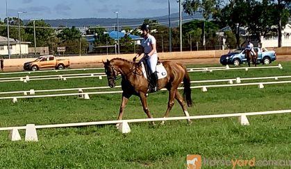 Quiet OTT Gelding on HorseYard.com.au