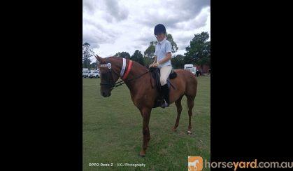 Missy thoroughbred on HorseYard.com.au