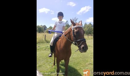 Missy on HorseYard.com.au