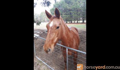 N/A on HorseYard.com.au