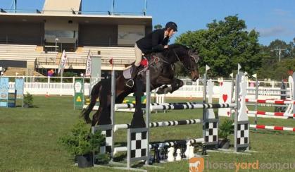 Beautiful Moving Showjumper on HorseYard.com.au