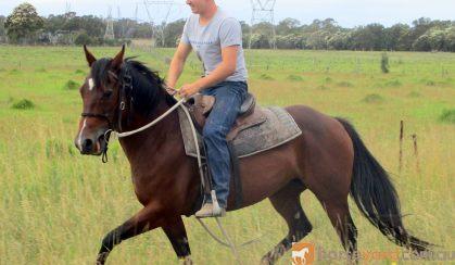 Quiet Bay QH Mare on HorseYard.com.au
