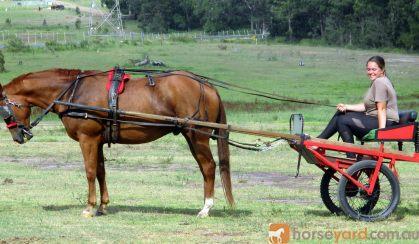Red Sulky Plus Full Set English Harness on HorseYard.com.au
