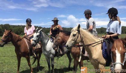 My lovely palomino  on HorseYard.com.au
