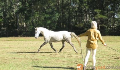 A.S.H. on HorseYard.com.au