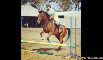 Clemente on HorseYard.com.au