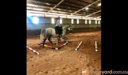 Pretty All Rounder, Quarterhorse x Arabian on HorseYard.com.au