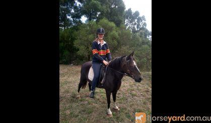 Australian Riding Pony Potential Plus on HorseYard.com.au