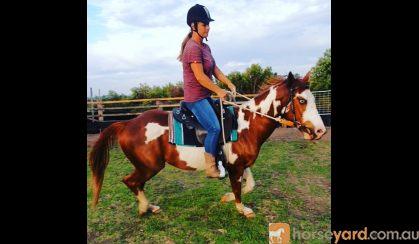 'Geronimo' Amazing Striking 7 yr old Gelding Qtr horse on HorseYard.com.au